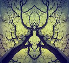 Walnut Tree (Dave Linscheid) Tags: tree snow winter texture mirroreffect picmonkey