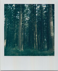 Scan 3 copy 2 (Emily_sarahd) Tags: polaroids nature naturephotography landscapes flowers colour colourful pink woods forest trees sun