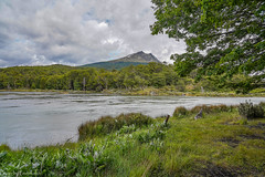 At the river / На реке (Vladimir Zhdanov) Tags: travel argentina tierradelfuego ushuaia lapataia water river tree forest foliage grass mountains mountain sky cloud landscape nature