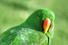 Green! (Nina_Ali) Tags: bird avian tropicalbirdland desford leicestershire england feathers