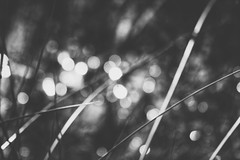 waterside (Pea Jay How) Tags: nature natural abstract impression impressionist bw blackandwhite mono monochrome blur light water reeds reed bokeh