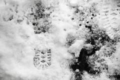 Snow in Washington, D.C. (Stephenie DeKouadio) Tags: canon photography outdoor blackandwhite monochrome snow washington washingtondc dc dcphotos dcurban winter bw