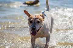 (alwaysforwardphotography) Tags: prime 50mm f18 d7500 nikon smile play walk water puppy dog dogpark lakebaldwin orlando