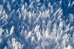 6M7A4958 (hallbæck) Tags: snekrystaller snowcrystals crystals snow vinter winter mh hørsholm canoneos5dmarkiii ef100mmf28lmacroisusm denmark macrodreams macrounlimited
