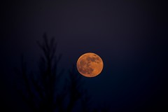 The blood red moon is coming (googling2000g) Tags: edmonton alberta evening sky blue orange moonrise rise red moon 2019