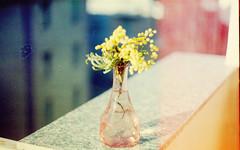 (Victoria Yarlikova) Tags: zenit zenit122 analog film scan scanfromnegative flowers epsonv700 agfacolor iso100 darkroom smallformat analogue spring blur