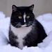 Fatty cat (Jakub Hlávka) Tags: cat fatty photography czech