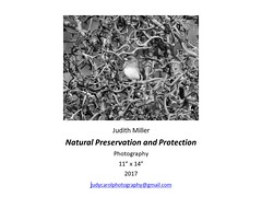 """Natural Preservation and Protection • <a style=""""font-size:0.8em;"""" href=""""https://www.flickr.com/photos/124378531@N04/47052357252/"""" target=""""_blank"""">View on Flickr</a>"""
