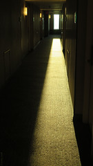 Hall Henge (Coyoty) Tags: westinhotel pittsburgh pennsylvania pa hotel sun hall hallway light lighting sunlight yellow gold contrast dark darkness photography technique texture carpet rays shadow window effects perspective dof depthoffield