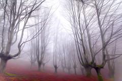 urkiola laiñoa art oleo 10 (juan luis olaeta) Tags: paisajes landscape nature forest bosque basoa hayedo pagoa fog foggy laiñoa nieblas photoshop ligthroom oleo art