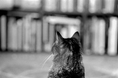 The cat. (miroir.photographie) Tags: 135 bw cat filmisnotdead istillshootfilm argentique analog 400 kodak trix 2019 mzs pentax
