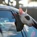 Spot Rides Sunset Boulevard - West Hollywood, CA