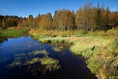 Small Lake in Levi (aivar.mikko) Tags: lake morning fallcolors lapland levi fell tundra finland red fall colors birches scandinavia outdoors north northern hike hiking walk walking trek trekking finnish landscapes finnishlandscapes landscape scenic view grass blue sky green yellow autumn