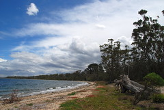 Downtime Down Under - Looking Along the Shoreline at Raymond Island (antonychammond) Tags: raymondisland landscape seascape sea sky clouds trees beach easternvictoria australia contactgroups thegalaxy worldwidelandscapes nwn