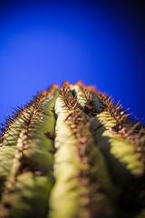 IMG_1106 (Victor Hernandez Photography) Tags: canon canonphotography canon7d arizona sabino canyon cactus saguaro desert az