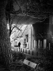 Winter tree frame... (明遊快) Tags: bench winter monochrome tree avenue bw street urban people pedestrian japan reflection lines cloudy