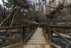 Si te sientes solo es porque construiste muros, en vez de puentes. (Amparo Hervella) Tags: lapedriza comunidaddemadrid españa spain naturaleza paisaje puente árbol agua d7000 nikon nikond7000