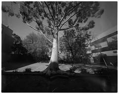 Camberhell ii (@fotodudenz) Tags: cameradactyl large format 4x5 film camera 47mm schneider super angulon xl ultra wide angle 2019 camberhell camberwell melbourne victoria australia ilford hp5 plus
