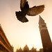 Bird in St Mark's Square in Venice
