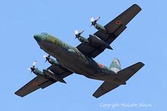 LOCKHEED C130H HERCULES 75-1075 JASDF (shanairpic) Tags: military transport c130 lockheedhercules atsugi jasdf japanairforce 751075