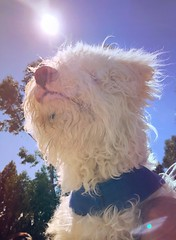 Woody 🐕 (.cynthia) Tags: perro junin tambo lima huancayo peru iphone dog