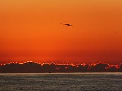 Primer amanecer 2019 (7) (calafellvalo) Tags: amaneceralbasolcalafellseaalbadasunrise amanecer sunrise amanecerdelaño2019 alba albada sea mar calafellvalo contraluz calafell aves gaviotas