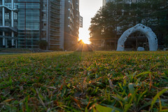 DSC07655 (archiwu945) Tags: 正修科技大學 校園景緻 校園環境 校園攝影 生活速寫 日出