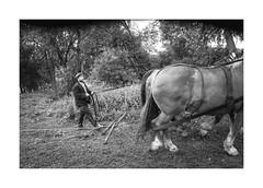 Heavy Horses (Paphylo) Tags: leicaq man monochrome heavyhorses animals people cigarette blackandwhite outdoor figure horse document 400asa