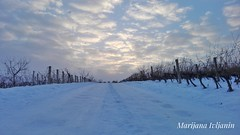 Cold January evening (marijanaivljanin993) Tags: winter snow white evening clouds sky cloud road path cold ice january country countryside zima sneg belo veče januar put led nebo oblaci oblak markovina aleksandrovac srbija serbia serbien photo photography focus camera huawei spontaneous creative inspiration spontanost inspiracija