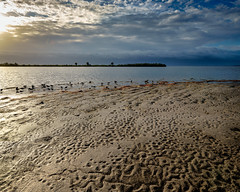 Early morning on the river shore (Ed Rosack) Tags: gatorcreekroad usa sand landscape storm nature water ©edrosack panorama florida beach cloud bird sky centralflorida merrittislandnationalwildliferefuge riverscape cloudy minwr shore titusville us