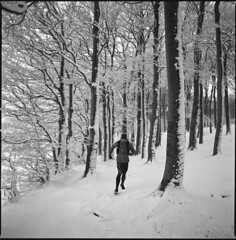 Ross making footprints (steve-jack) Tags: hasselblad 501cm 50mm cfi kodak trix 400 film 120 6x6 medium format perceptol snow woods forest uk trees epson v500