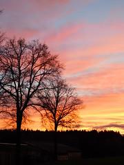 Bäume vor Abendhimmel (elisabeth.mcghee) Tags: abendrot abendhimmel abendsonne sunset sonnenuntergang himmel sky wolken clouds unterbibrach bäume trees wald forest oberpfalz upper palatinate