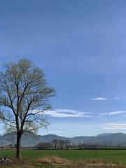 (Paolo Cozzarizza) Tags: italia lombardia brescia palazzolosulloglio panorama cielo prato alberi