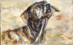 Ithack aquarelle (Jluc22fr) Tags: art artist dog chien maroc aquarelle watercolor jluc jlucart