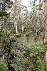 DSC6850 (Starcadet) Tags: orlando alligator krokodil gator gatorland florida glades sumpf zoo hunger tiere fressen nilkrokodil aufzuchtstation