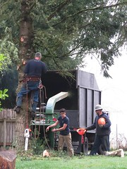 Hard Hat Time (Linda on the bridge to NewWhere) Tags: climber climbing hardhat integritytreeservice tree treeservice worker
