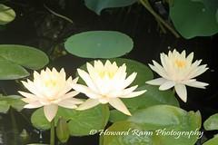 Longwood Gardens Summer 2017 (181) (Framemaker 2014) Tags: longwood gardens kennett square pennsylvania united states america