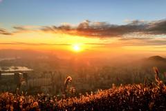 香港 飛鵝山 Kowloon Peak, Hong Kong #sunset #kowloonpeak #feingoshan #芒草 City & Nature (phil_foto) Tags: 24105mm 24105 6dm2 飛鵝山 hongkong 香港 日落 sunset kowloonpeak feingoshan 芒草