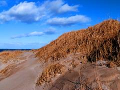 Dunes, St. Andrews, Scotland (gcobb84) Tags: beach sand grass clouds path