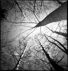 Look up to the sky (Foide) Tags: pinhole pinholetree f128 nolens