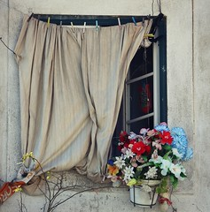 Window dressing (Eefje Dr) Tags: portugal lisbon window curtain flower pot