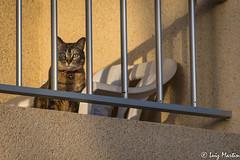 Mirada del Gato (lcmrodriguez) Tags: gato mirada