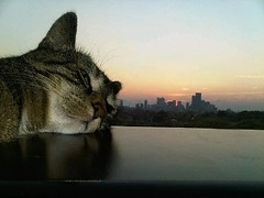 Little cat in the big city (Christy Turner Photography) Tags: cat cats kitteh kitty gatto feline meow