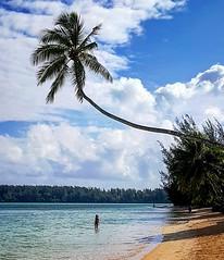Moorea (D. [SansPretentionAucune] (•̪●)  ✪) Tags: moorea polynesia frenchpolynesia polynesiefrancaise lagoon pacific lagon tahiti beach plage palm coconuts cocotier