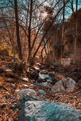 Laujar de Andarax, Almería. (fcojavier1991) Tags: almería andalucía españa spain naturaleza nature 1750 f28 sigma laujar andarax amanecer sunrise nikon d3300 árboles río river trees forest bosque sun sol
