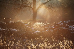 Fränkische Landschaft (geraldtourniaire) Tags: mittelfranken franken natur nature eos6d ef 135l landschaft licht l 6d sonnenuntergang