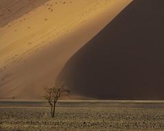 Sossusvlei The Tree (www.mikereidphotography.com) Tags: tree namibia dunes dune sand africa landscape sossusvlei fuji gfx50s canon ngc