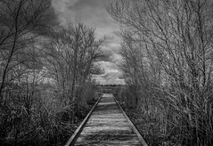 Black and White HDR (Cosumnes River Preserve, March 6, 2019) (Rohit KC Photography) Tags: blackandwhite bw hdr highdynamicrange canondslr canonphotography cosumnesriverpreserve hiking woodenpath branches shrubs wetlands park trail detailed sky clouds fun canon5dmarkii canonef24105f4lisusmlens cloudyweather overcast photographyblackandwhitephotography grass wood