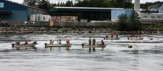 IMG_2649-1 (Andre56154) Tags: schweden sweden sverige fluss river wasser water angeln fishing