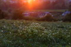20180504-Canon EOS 6D-8060 (Bartek Rozanski) Tags: gesves namur belgium ardennes belgie belgique ardennen spring field sunset rural house outoffocus hiking village